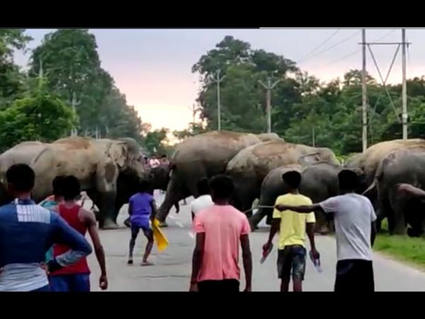 Elephant Justice Killed Man. Mob Justice Followed!